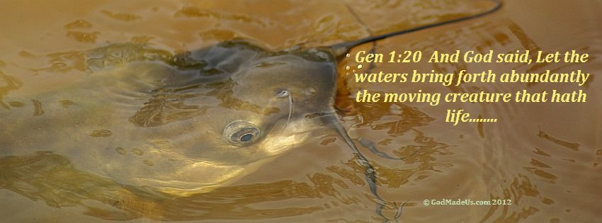 Image of a fish breaking the surface of the water with the words: Gen 1:20 And God said, Let the waters bring forth abundantly the moving creature that hath life........