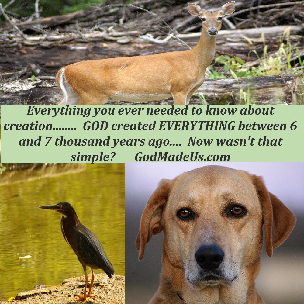 Picture of these words: God created everything between 6 and 7 thousand years ago. Now wasn't that simple? These words are accompanied by images of a dog, a bird and a deer. GodMadeUs.com